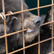 Angry Kamchatka Brown Bear Gnaws an Aviary Lattice in Zoo - PhotoDune Item for Sale