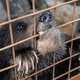 Small Kamchatka Brown Bear Cub Gnaws an Aviary Lattice in Zoo - PhotoDune Item for Sale