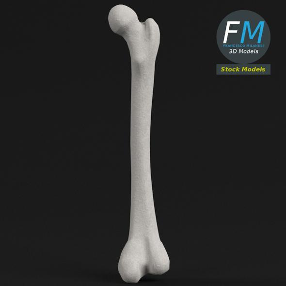 Anatomy - Human Femur 2 - 3DOcean Item for Sale