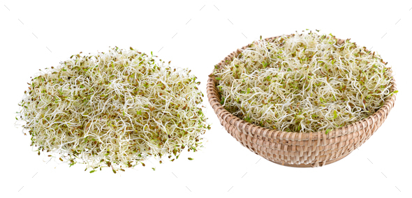 Sprouted alfalfa seeds on a white background - Stock Photo - Images