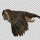 4K Owl Fly - VideoHive Item for Sale
