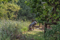 Baboon eating from a refuse bin at Injisuthi - PhotoDune Item for Sale