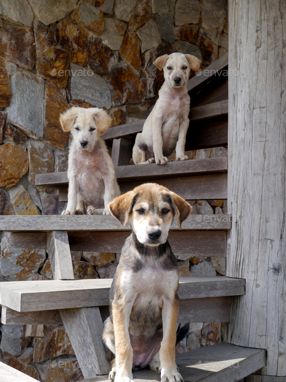 Three dogs on the stairs - Stock Photo - Images