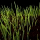 Growing Green Grass Plant - VideoHive Item for Sale