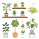House Indoor Vector Plants and Nature Homemade