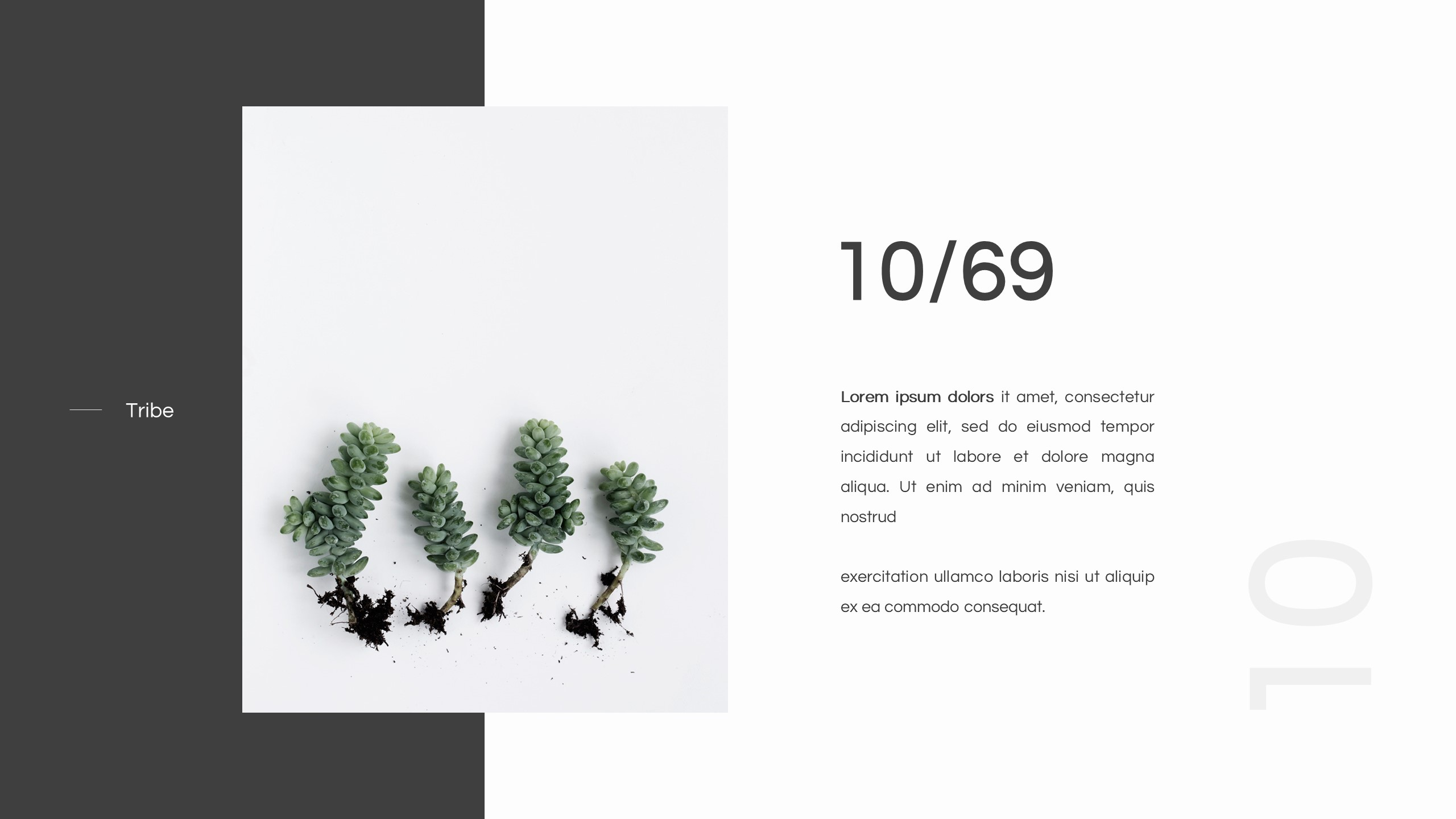 Tribe Minimal Design Powerpoint Template