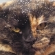Angry Hissing Cat at Winter - VideoHive Item for Sale