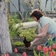 Woman Planting a Plant - VideoHive Item for Sale