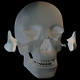 Skull Anatomy - VideoHive Item for Sale