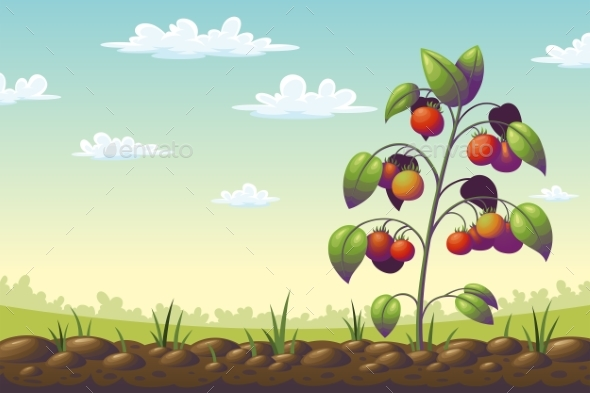 Tomato Plant on a Field - Landscapes Nature