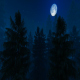 Flight Over Scary Forest With Full Moon - VideoHive Item for Sale