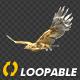 Two Bald Eagles - Flying Around - Transparent Loop - 4K - 37