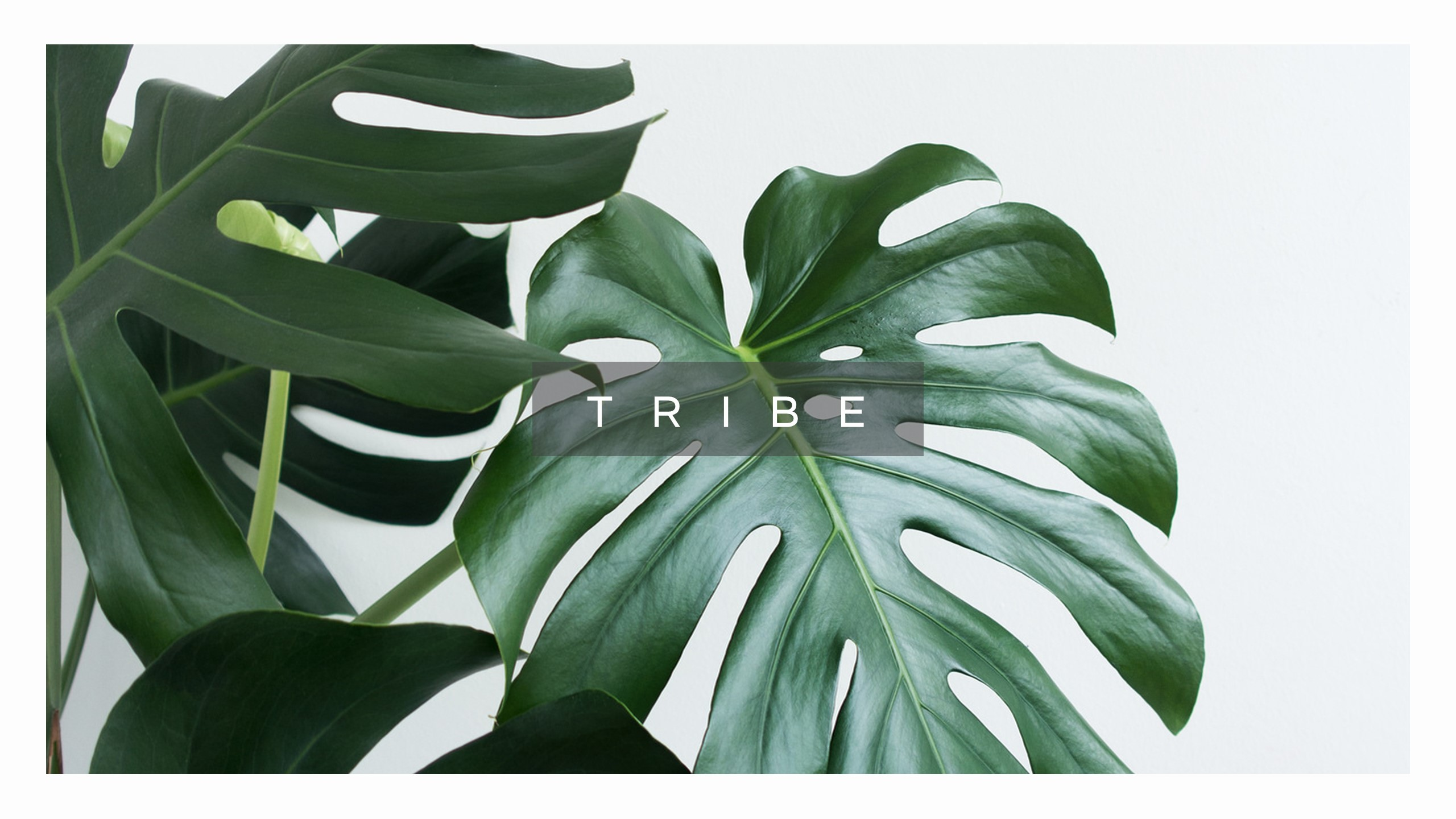 Tribe Minimal Design Keynote Template