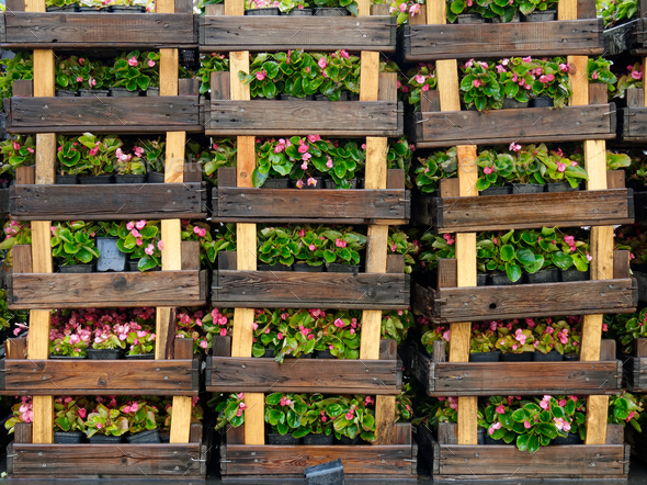 Wooden crates with flowers - Stock Photo - Images