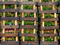 Wooden crates with flowers - PhotoDune Item for Sale