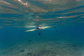 Surfer underwater view - PhotoDune Item for Sale
