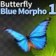 Butterfly Blue Morpho 1 - VideoHive Item for Sale