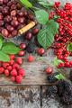 Variety of fresh berries - PhotoDune Item for Sale