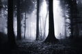 Dark spooky Halloween forest with fog - PhotoDune Item for Sale