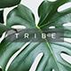 Tribe Minimal Design Google Slide Template