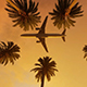 Coconut Palms Tree And Airplane - VideoHive Item for Sale