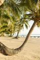 Tropical Beach Palmtree - PhotoDune Item for Sale