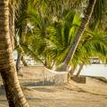 Tropical Beach Hammock - PhotoDune Item for Sale