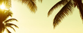 Tropical Palmtree Vintage Banner - PhotoDune Item for Sale