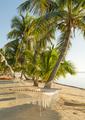 Tropical Holiday Hammock - PhotoDune Item for Sale