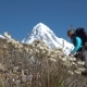 Edelweiss and a Tourist in the Himalayas - VideoHive Item for Sale