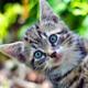 Little kitten meowing