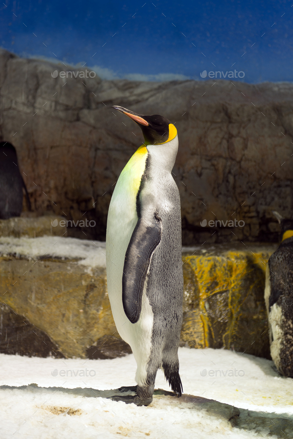 Penguin standing on Ice - Stock Photo - Images
