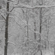 Winter Forest During a Snowfall - VideoHive Item for Sale
