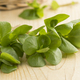 Fresh raw common purslane - PhotoDune Item for Sale