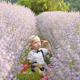 Children in Lavender Fields - VideoHive Item for Sale