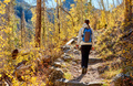 Tourist hiking in aspen grove at autumn - PhotoDune Item for Sale