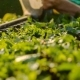 A Professional Gardener Trimmed Trimmer Garden Bushes - VideoHive Item for Sale