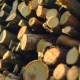 A Bunch of Shredded Firewood Is Preparing for the Winter - VideoHive Item for Sale