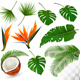 Set of Tropical Leaves and Exotic Flowers