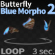Butterfly Blue Morpho 2 - VideoHive Item for Sale