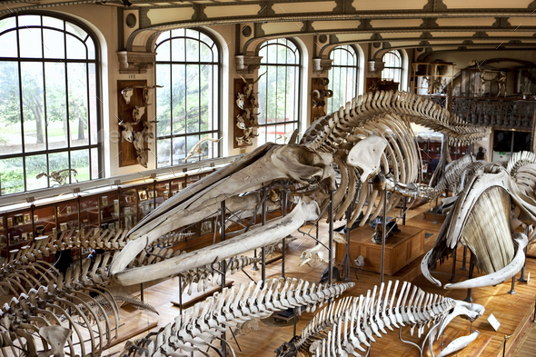 Ethnology Museum in Paris - Stock Photo - Images