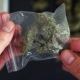 Male Drug Dealer Holding a Bag of Fresh Marijuana Weed Cannabis Bud - VideoHive Item for Sale