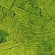 Drone Shot of Top View of Green Tea Plantation - VideoHive Item for Sale