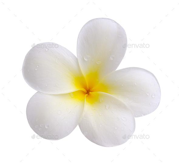 Tropical flowers frangipani (plumeria) isolated on white backgro - Stock Photo - Images