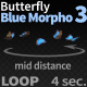 Butterfly Blue Morpho 3 - VideoHive Item for Sale