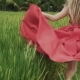 A   Shot From the Back of the Model in a Bright Red Dress Runs Across the Rice Field Barefoot, Hol - VideoHive Item for Sale