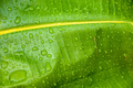 Water drops on a leaf - PhotoDune Item for Sale