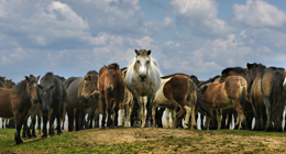 Videos - Horses