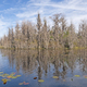 Hummock Island in the Okefenokee - PhotoDune Item for Sale