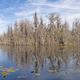 Hummock Island in the Okefenokee - PhotoDune Item for Sale